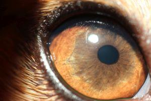 katze hat große pupillen